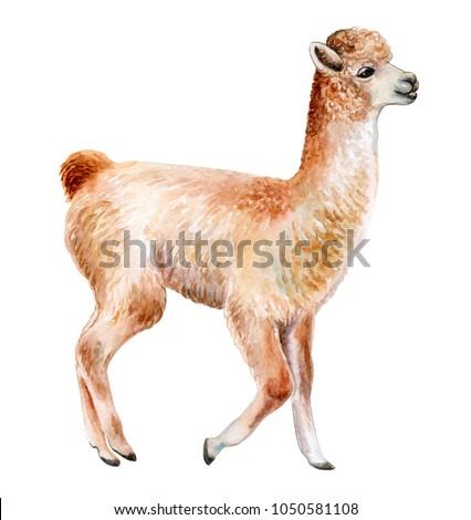llama or alpaca hand drawn...