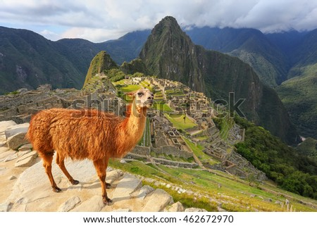Llama standing at Machu Picchu overlook in Peru. In 2007 Machu Picchu was voted one of the New Seven Wonders of the World. #462672970