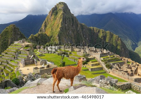 Llama standing at Machu Picchu overlook in Peru. In 2007 Machu Picchu was voted one of the New Seven Wonders of the World. #465498017