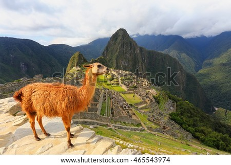 Llama standing at Machu Picchu overlook in Peru. In 2007 Machu Picchu was voted one of the New Seven Wonders of the World. #465543974