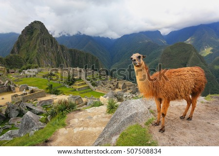 Llama standing at Machu Picchu overlook in Peru. In 2007 Machu Picchu was voted one of the New Seven Wonders of the World. #507508834
