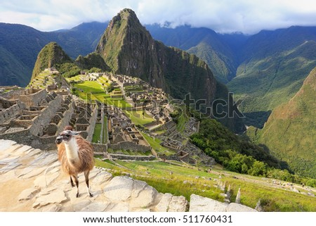 Llama standing at Machu Picchu overlook in Peru. In 2007 Machu Picchu was voted one of the New Seven Wonders of the World. #511760431