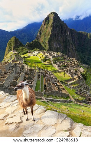 Llama standing at Machu Picchu overlook in Peru. In 2007 Machu Picchu was voted one of the New Seven Wonders of the World. #524986618