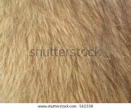 Llama Wool - stock photo