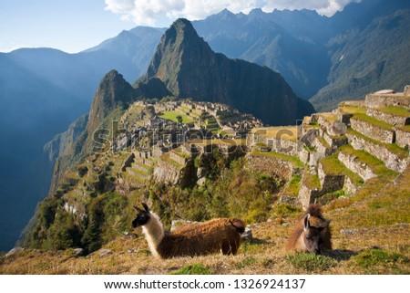 Llamas at Machu Picchu #1326924137