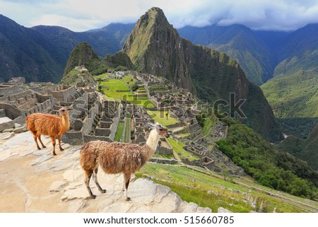 Llamas standing at Machu Picchu overlook in Peru. In 2007 Machu Picchu was voted one of the New Seven Wonders of the World. #515660785