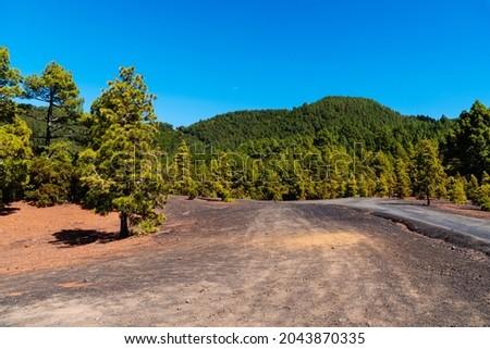 Llano del Jable Astronomical Viewpoint, Cumbre Vieja Volcano. Volcanic landscape with Canarian Pine Trees Forest, Pinus canariensis. Volcano of San Juan and Cabeza de Vaca mountain. La Palma, Canary  Foto stock ©