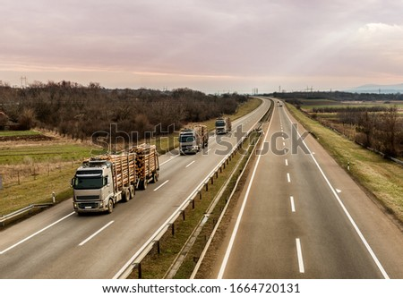 Loaded timber trucks transport timber logs with an overload on the highway. Wood Cargo Transporter. The concept of transportation of timber and wood