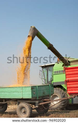 Loading of grain of corn in the  tractor trailer