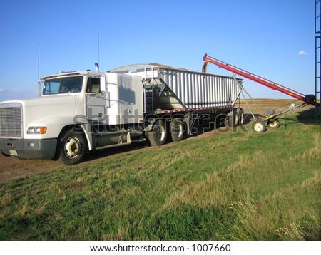loading wheat into trucks during harvest in Saskatchewan
