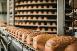 Loafs of bread in a bakery on an automated conveyor belt