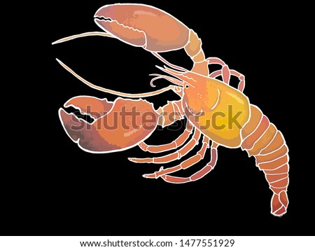 Lobster Hand drawn watercolor Painting Art on black background