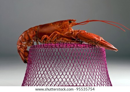 Lobster On His Cage.