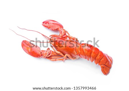 Lobsters isolated on white background,red lobster. #1357993466