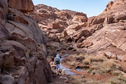 Local bedouin and his dog on a hiking trail to the summit of the Mount Sinai (Mount Horeb or Gabal Musa), Sinai, Egypt. Panoramic view over the trail on surrounding red mountains and huge boulders.