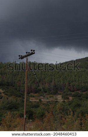 Local Forest before the storm