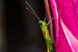 Locust (or grasshopper) on the plant.