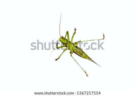 Locusts are certain species of short-horned grasshoppers,that have a swarming phase. Under drought, locusts move and rapidly strip fields and damage to crops.