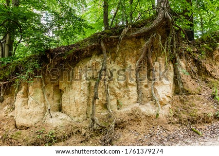 Loess rock slope wall in natural landscape. Trees roots visible (bare) on surface. Soil erosion. Szczebrzeszyn Landscape Park, Poland, Europe. Foto stock ©