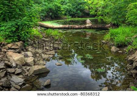 Log and stones in transparent water of forest lake. HDR image