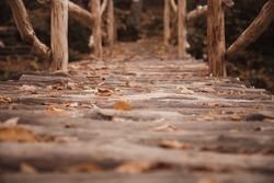 log bridge in the autumn forest