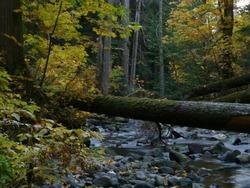 Log bridge over stream