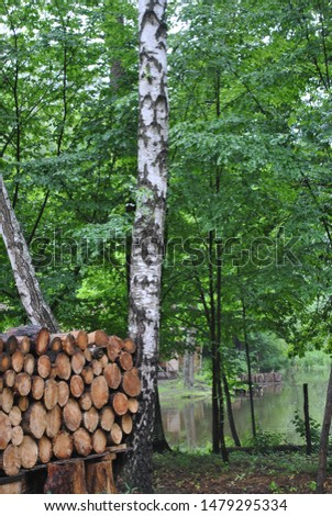log cabins in the forest #1479295334