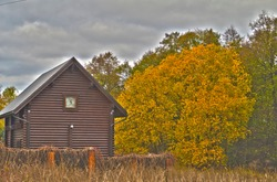 Log house behind a fence and a tree with yellowed foliage, autumn