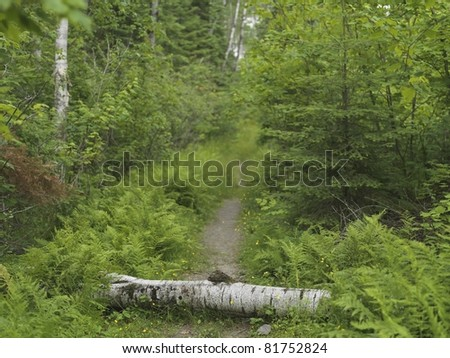 Log In Path, Lake Of The Woods, Ontario, Canada