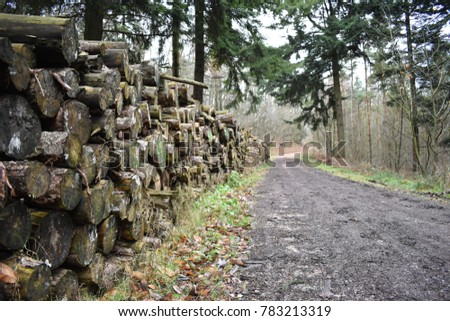 Log pile extending into the distance adjacent to a forestry track, with a backdrop of a mixture of evergreen and deciduous woodland. #783213319