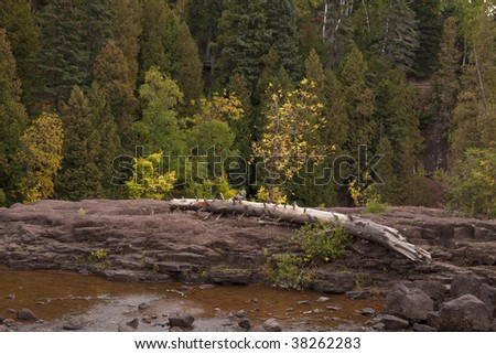 Log Rock Tree Autumn