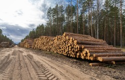 Log stacks along the forest road. Forest pine and spruce trees. Log trunks pile, the logging timber wood industry.
