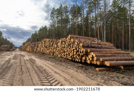 Log stacks along the forest road. Forest pine and spruce trees. Log trunks pile, the logging timber wood industry. ストックフォト ©