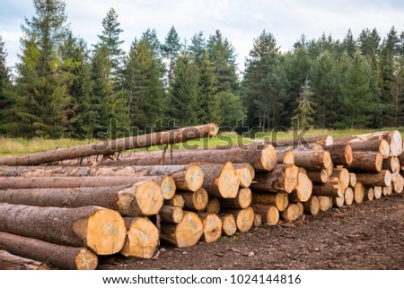 Free Photos Forestry And Timber Harvesting In Poland
