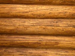 Log trunk, natural texture. Wood pattern.