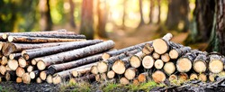 Log trunks pile, the logging timber forest wood industry. Wide banner or panorama heavy wood trunks.