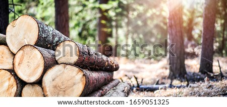 Log trunks pile, the logging timber forest wood industry. Wide banner or panorama heavy wood trunks.  Foto d'archivio ©
