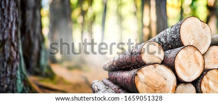 Log trunks pile, the logging timber forest wood industry. Wide banner or panorama of wood trunks timber harvesting in forest.