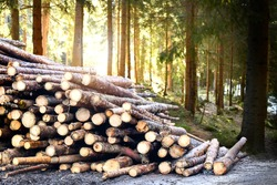 Log trunks pile, the logging timber forest wood industry. Wooden trunks timber harvesting.