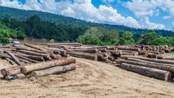 log yard of rain forest tropical hardwood on Mahakam riverbank, outback of Borneo, Indonesia. industrial and environmental background