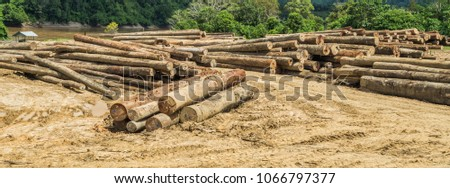 log yard of rain forest tropical hardwood on Mahakam riverbank, outback of Borneo, Indonesia. industrial and environmental background #1066797377