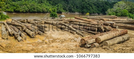 log yard of rain forest tropical hardwood on Mahakam riverbank, outback of Borneo, Indonesia. industrial and environmental background #1066797383