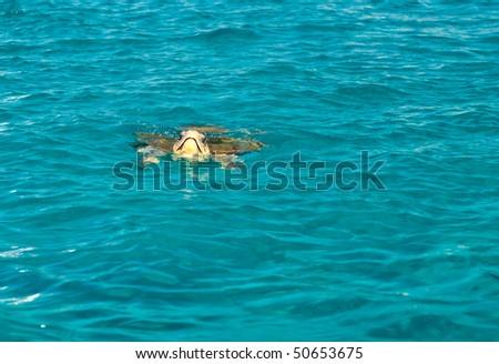 Loggerhead sea turtle (Caretta caretta) swimming, Zakynthos island, Greece
