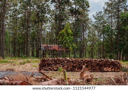 Logging in deciduous dipterocarp forests for use in the salt industry.  #1121544977