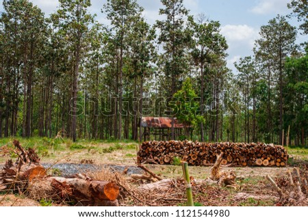 Logging in deciduous dipterocarp forests for use in the salt industry.  #1121544980