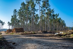 Logging worksite in the woods