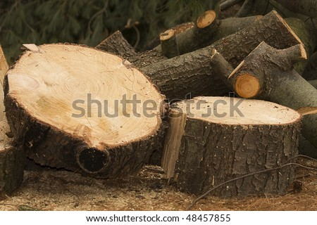 Logs and large portions of a tree cut down - stock photo