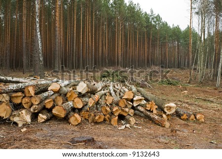 Logs are stacked up after being cut down