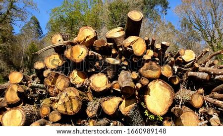 logs cut from stacked eucalyptus trees, by Fermín Tamames Stok fotoğraf ©