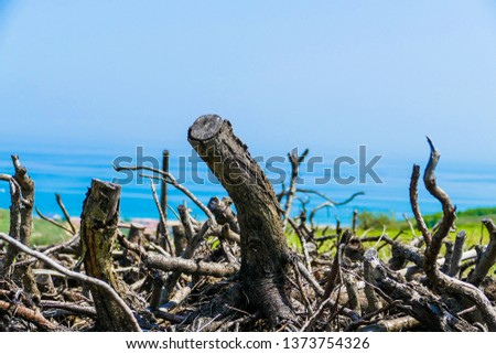 logs in the foreground and sea in the background #1373754326